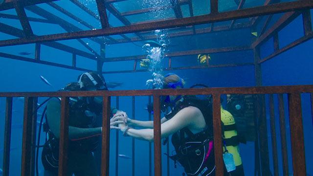 47 meters down cage